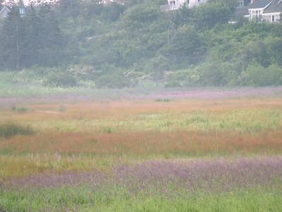 Meadow in early morning