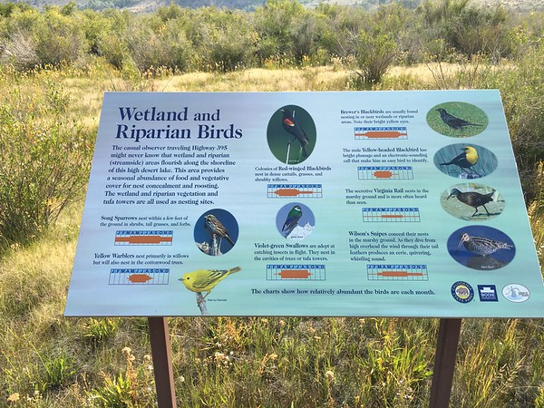 Birds of Mono Lake