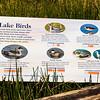 Birds of Mono Lake