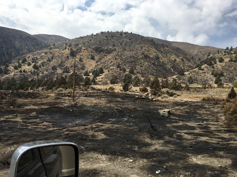 Burned landscape