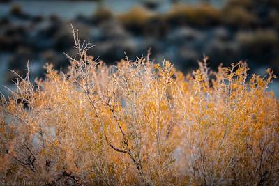Sunrise Bush (1 of 1)