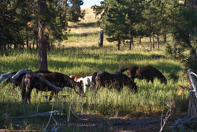 The 4 new fillies and foal on Wild Horse Island
