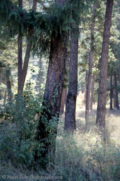 """Morning!""<br /> Pioneer Park<br /> Libby, MT"
