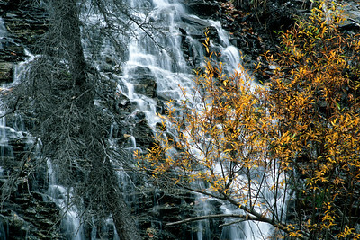 Tree And Waterfall