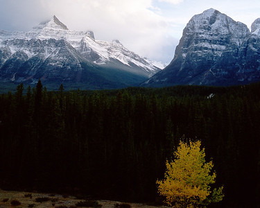 Mountain And Yellow Tree