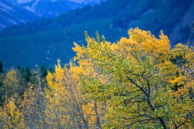 Layered Yellows