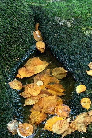 Leaves And Moss