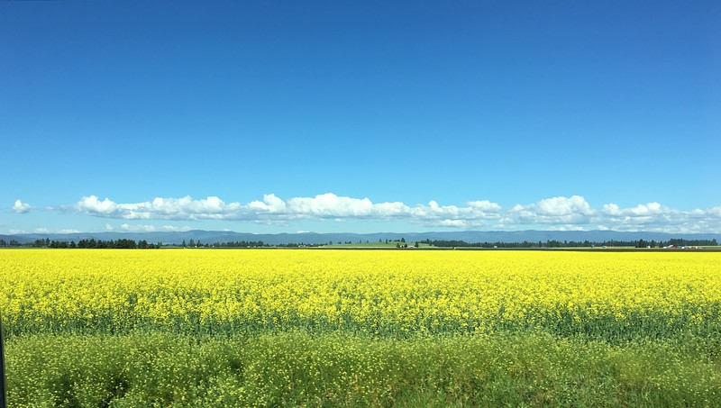 Flathead Valley flowering crop