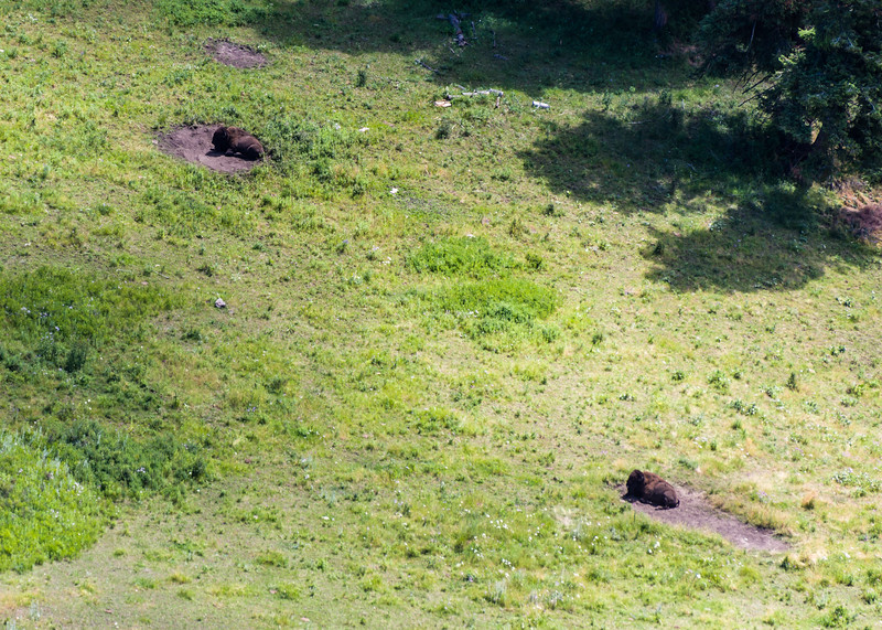 Bison wallows