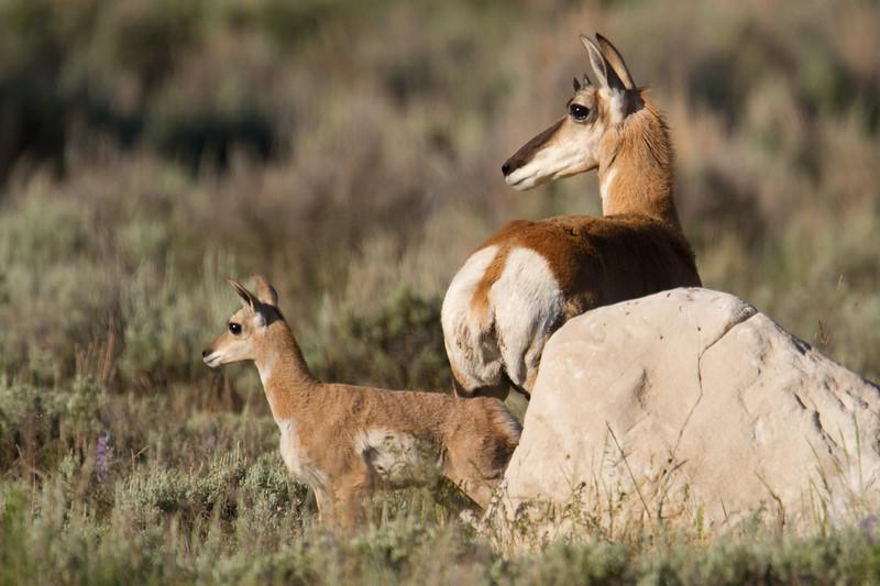 """<a href=""""http://wklein.smugmug.com/Travel/Montana-Red-Rock-Lake-NWR-Elk"""">http://wklein.smugmug.com/Travel/Montana-Red-Rock-Lake-NWR-Elk</a>"""