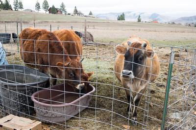Montana Visit Nov 2014