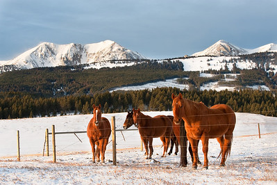 a small herd of horses hang out by the fence.  in the background is the bridger mountain range.