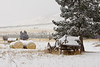 hay bails and an old wagon sit a part of a winter wonderland scene at a montana ranch.