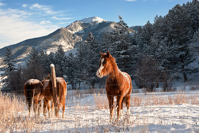 it is a sunny frigid morning on this montana ranch.  A horse stands in a field with a snowcapped mountain in the background.
