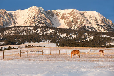The early morning winter light cast a golden color on the bridger mountains.