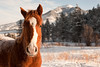closeup of a horse's head is bathed with the cold morning light.  a mountain is the backdrop on this montana ranch.