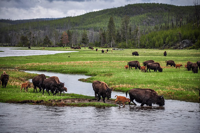 Yellowstone National Park WY