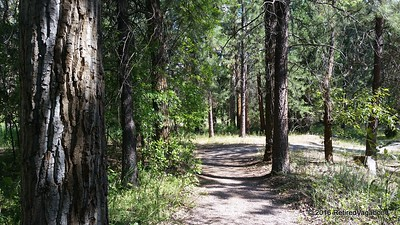 Nature Trail Along Clark's Fork