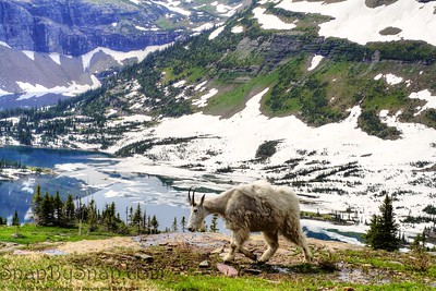 Goat and Lake