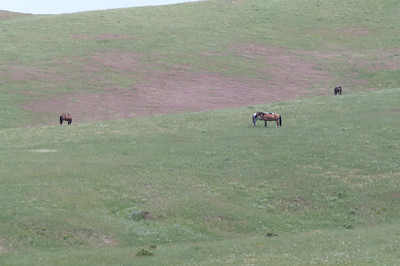 Yellowstone Vacation - Horses on Crow Indian Reservation near Little Bighorn National Monument.