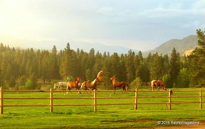 Horse Play - Chief Joseph Ranch