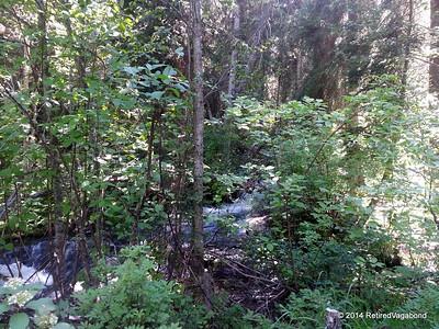 Blodgett Creek