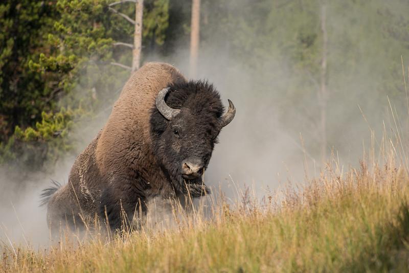 Danger in Montana