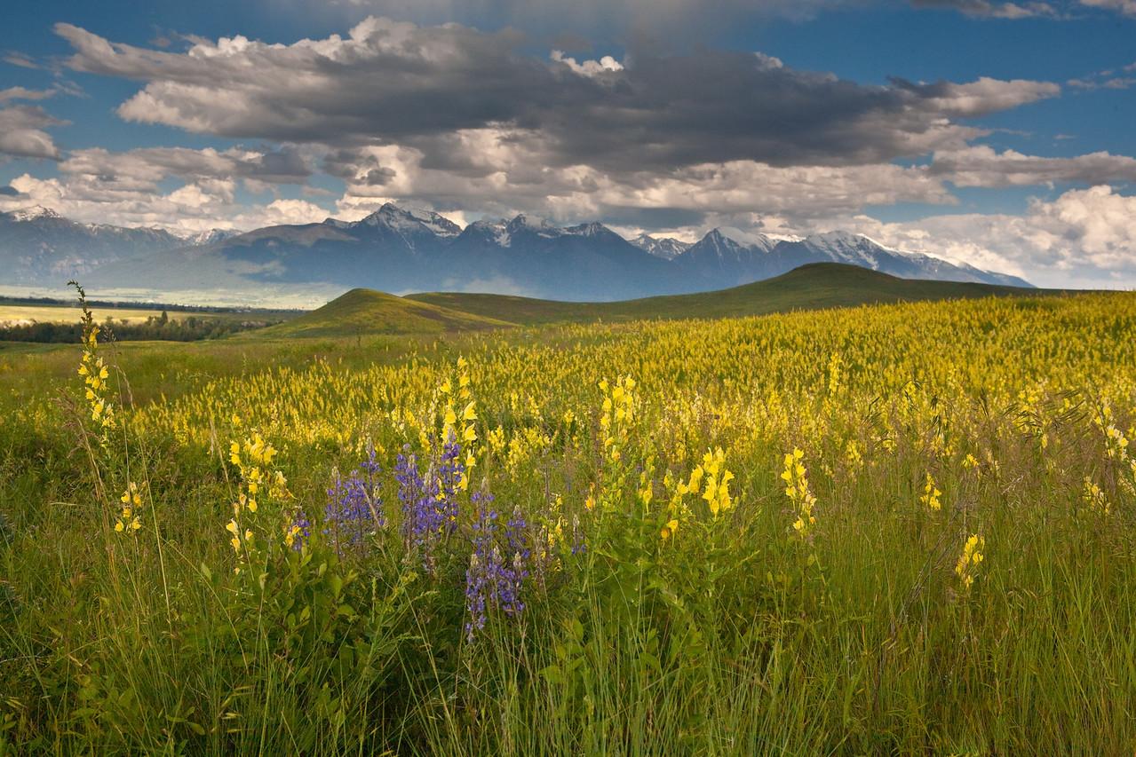 National Bison Range / Mission Mountains