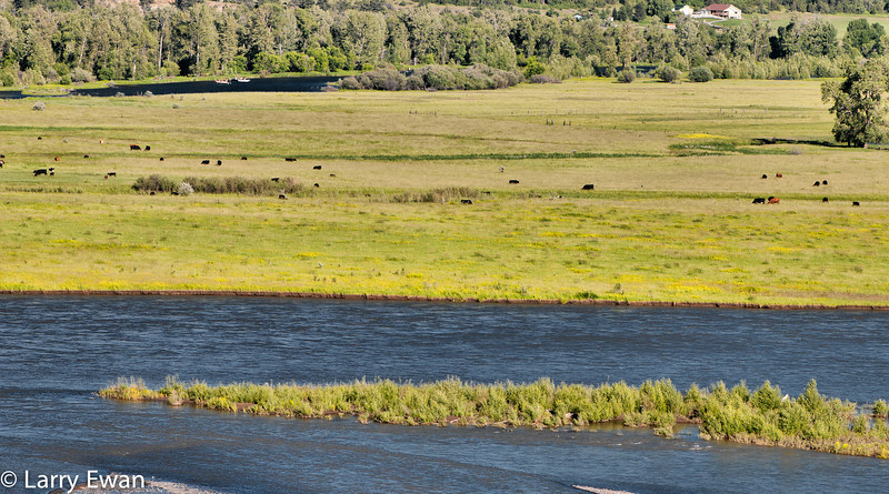 Pasture between the Yellowstone (foreground) and Stillwater (background) Rivers.