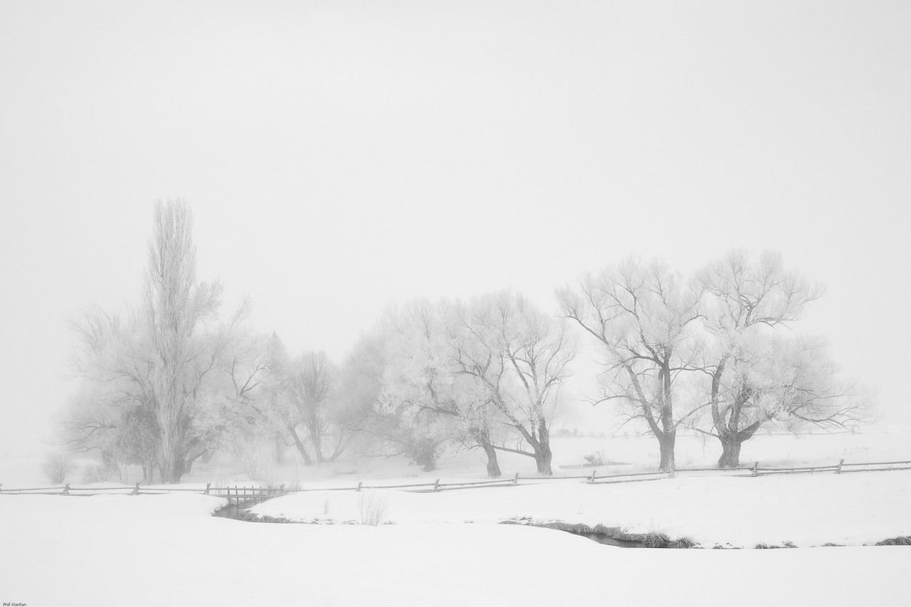 Winter fog B&W