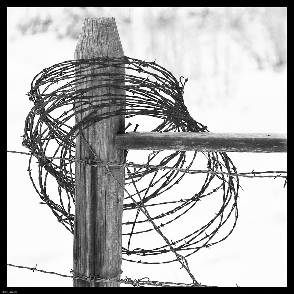 Barbed Wire B&W