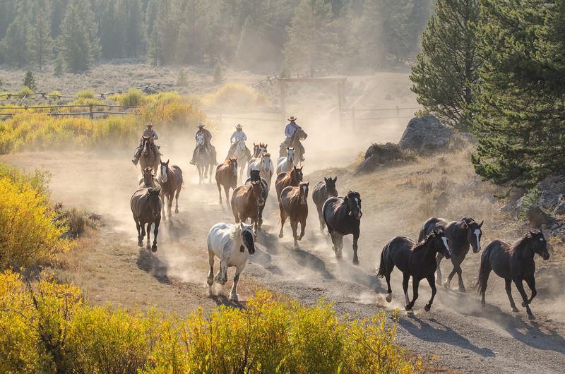 Bringing the horses...