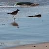 Montecito beach-0102