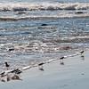 Montecito beach-0073