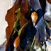 Montecito beach-0101