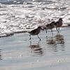 Montecito beach-0072