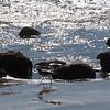 Montecito beach-0115