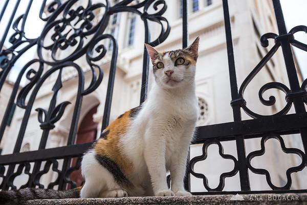 A Dubrovnik cat