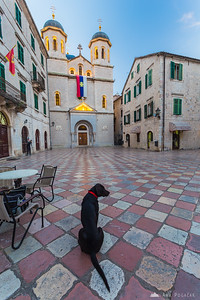 Dog sitting on the square at St. Nicholas church in Kotor at dawn