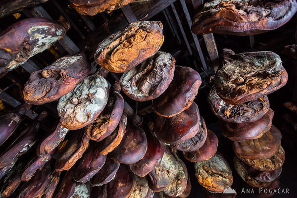 Prosciutto is drying