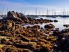 Morning Sun on Monterey Bay and  Marina
