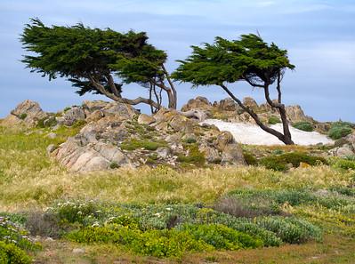 Monterey 1405