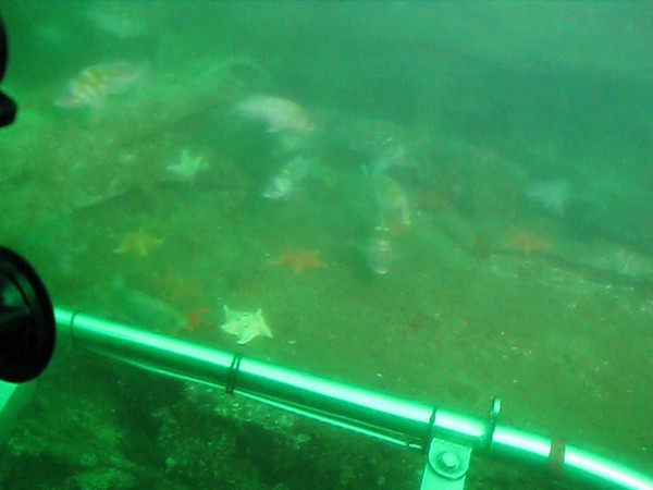 Monterey A720 - 062