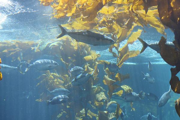 Monterey Aquarium - July 2009