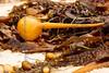 kelp floats, all sizes