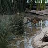 Seabird @ Monterey Bay Aquarium
