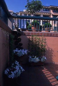 Narrow walkway decorated with flowers