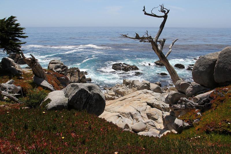 Ghost Tree, Monterey Bay