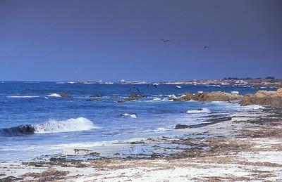 Seagulls flying off Pebble Beach coastline