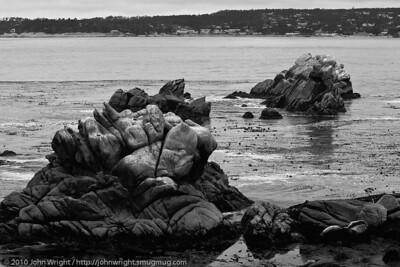 Guillemot Island